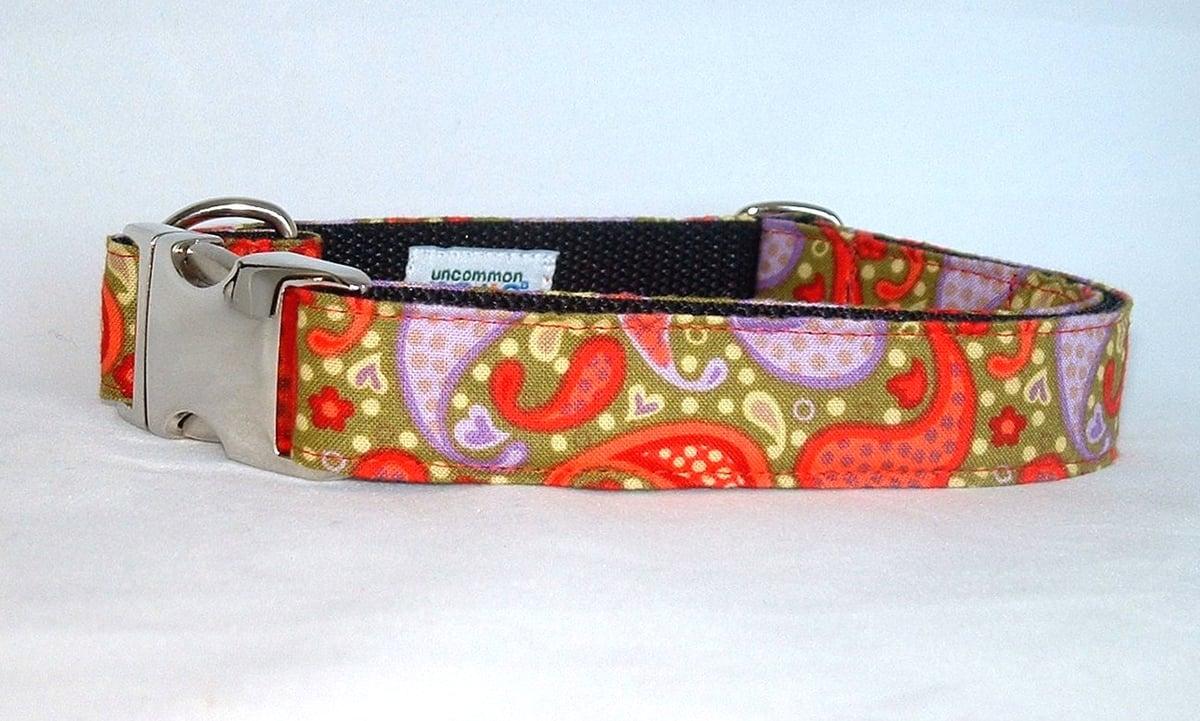 Playful Paisley - Dog Collar