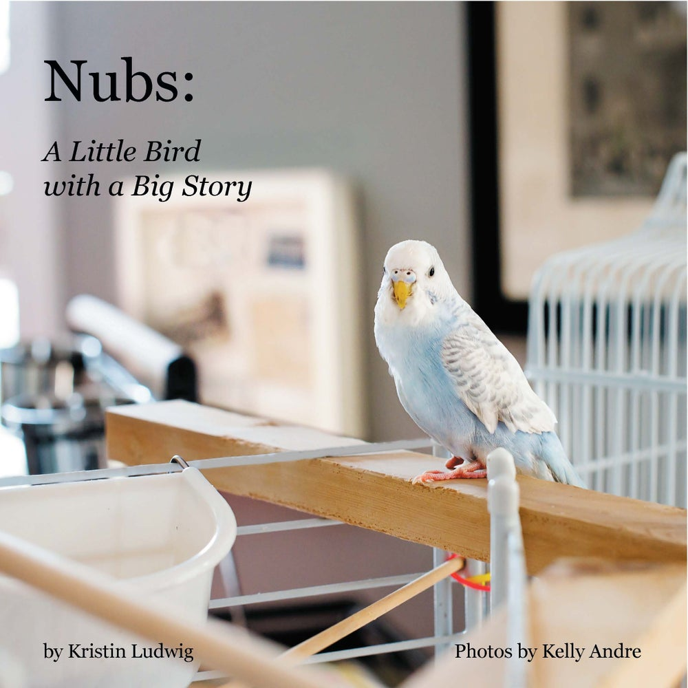 Image of Nubs:  A Little Bird with a Big Story<br />