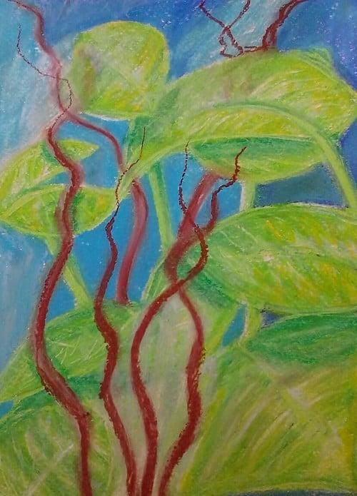 Image of Tio's plants