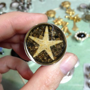 "Image of Starfish Plugs (sizes 5/8-2"")"