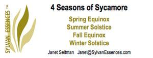 Image of 4 Season of Sycamore Essences (4 bottle set)