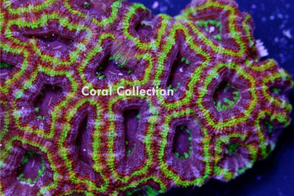 Image of Rainbow Crush Acan