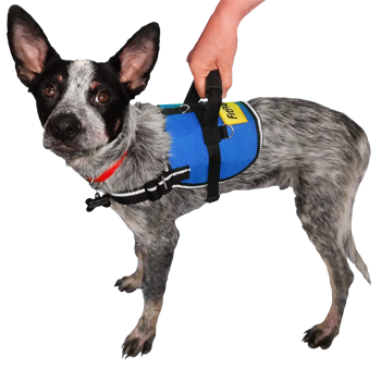 Image of FitPAWS® Safety Harness