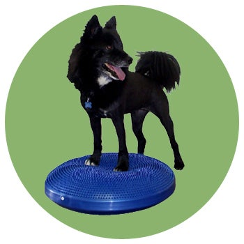 Image of FitPAWS® Balance Disc
