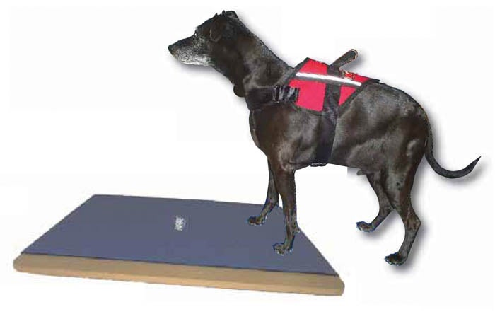 Image of FitPAWS® Giant Rocker Board