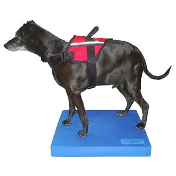 Image of FitPAWS® Balance Pad