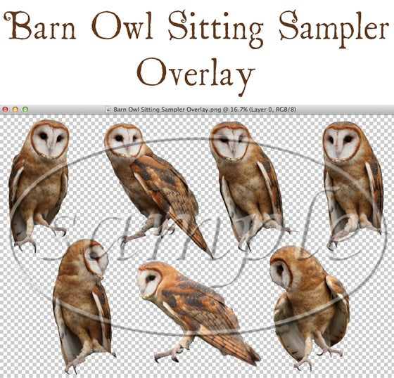Image of Barn Owl Sitting Sampler Overlay