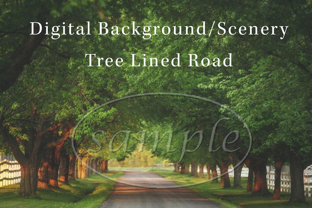 Image of Tree Lined Road Digital Background/Digital Photo