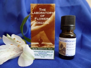 Image of Essential Oil - Eucaltyptus Globulus (12 ml)