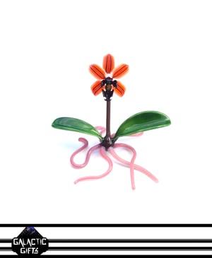 Image of Jupiter Nielsen Coral Tiger Orchid Flower Specimen Sculpture