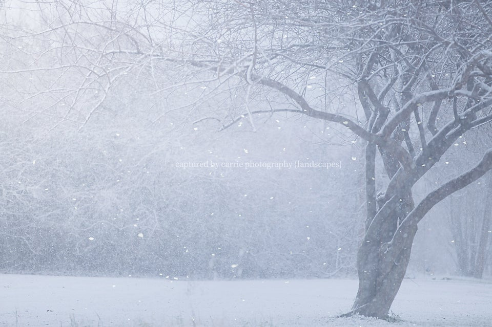 Image of Gently Falling Snow Overlay