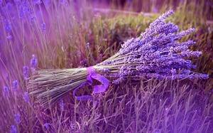 Image of Soft Lavender