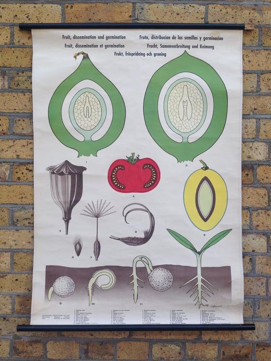 Image of Vintage School Botanical Poster - Fruit Dissemination & Germination