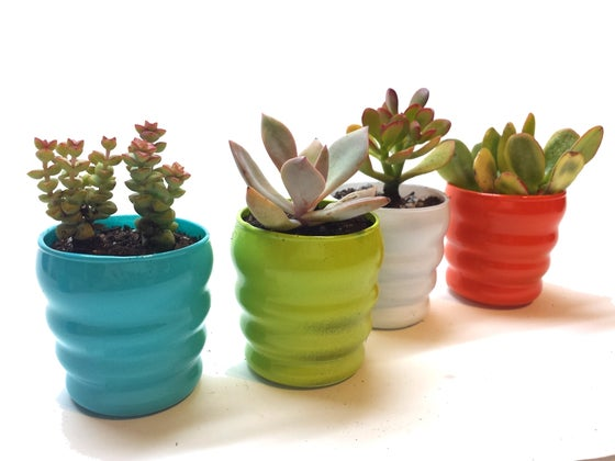 Image of Succulents in Colorful Mini Glass Planter (set of 4)