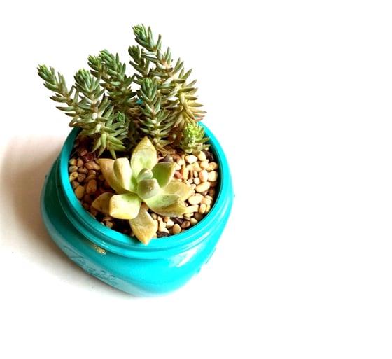 Image of Painted 8oz Mason Jar with Succulentsc