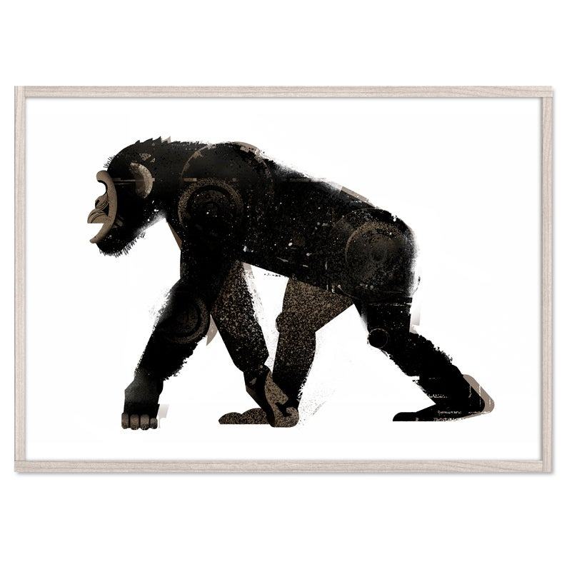 Image of Chimp