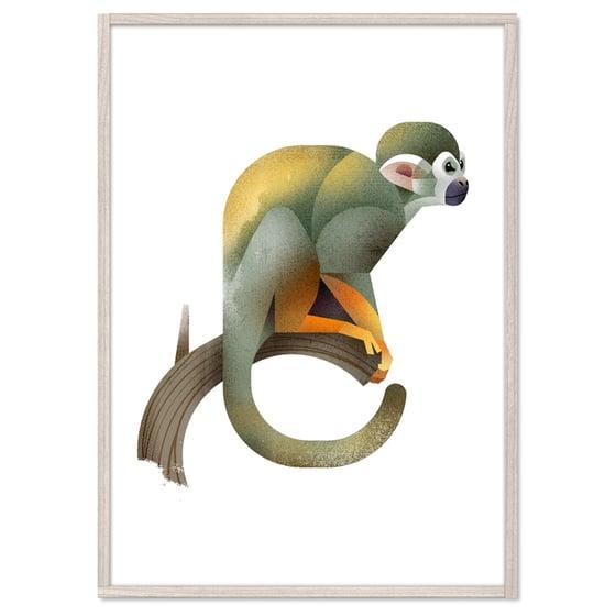 Image of Squirrel Monkey