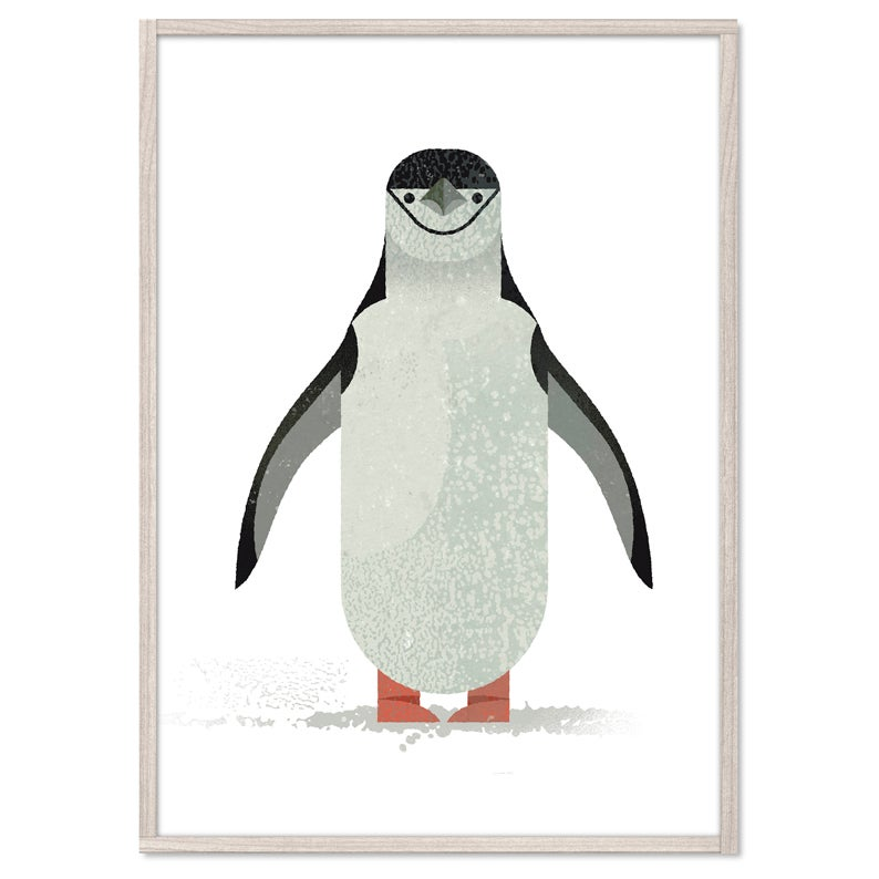 Image of Chinstrap Penguin