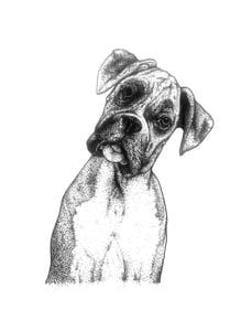 Image of Boxer Dog