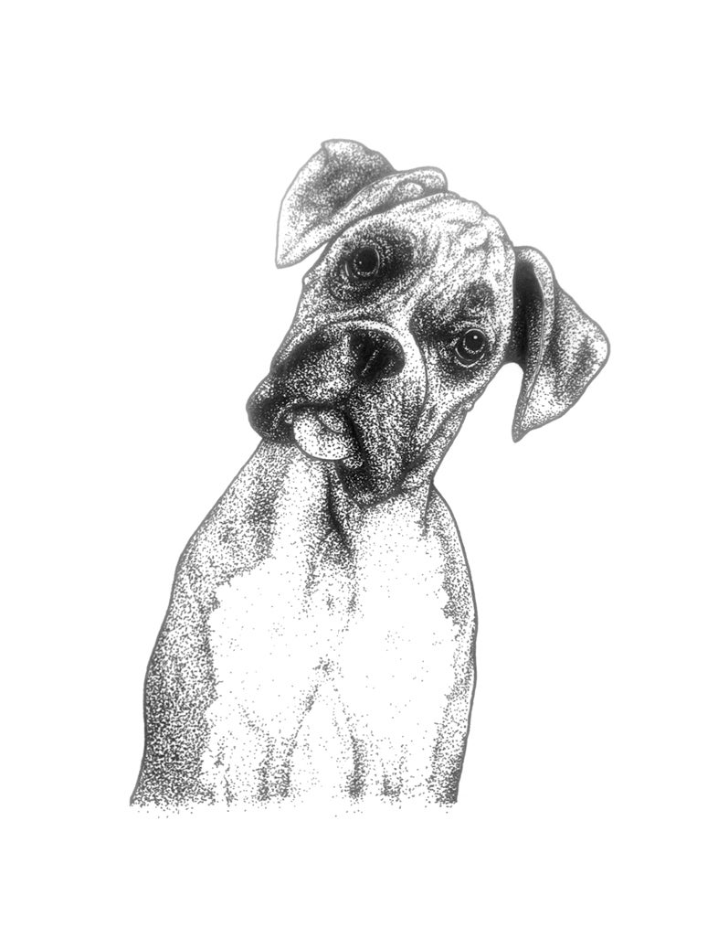 Image of Boxer Dog