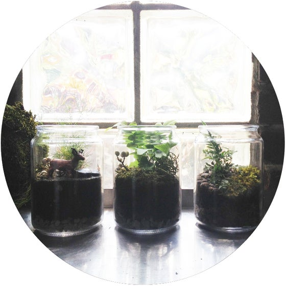 Image of Private TERRARIUM Workshop
