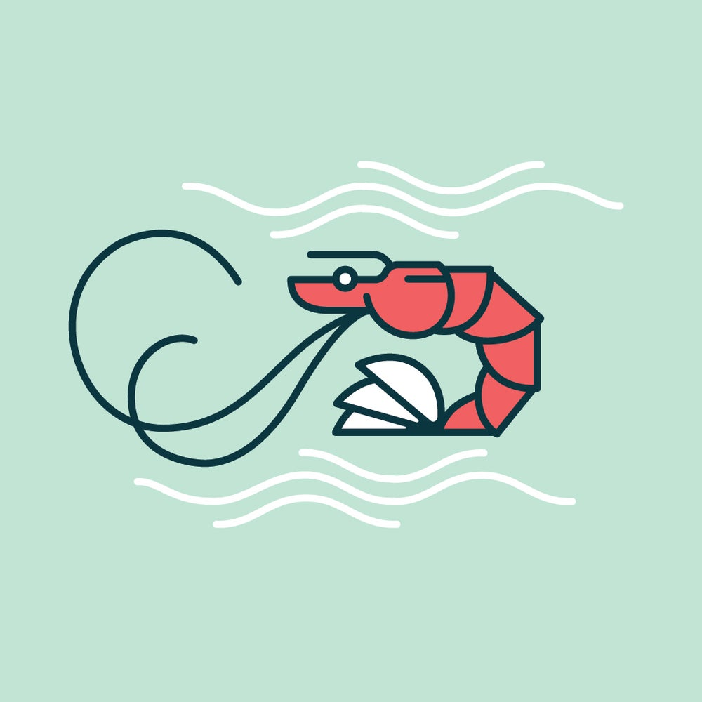 Image of Shrimp