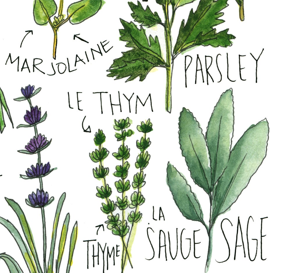 Image of French Herbs Watercolor Print