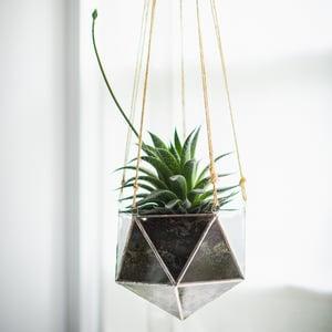 Image of Linea Terrarium Planter