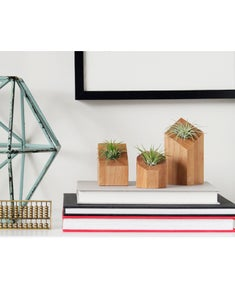 Image of Air Plant Holder - Set of Three Natural - <i>Plants Included</i>