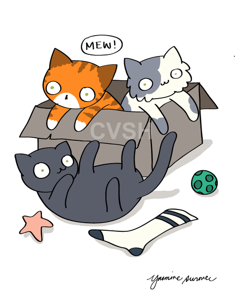 Image of Add-on: + 1 Cat/Pet