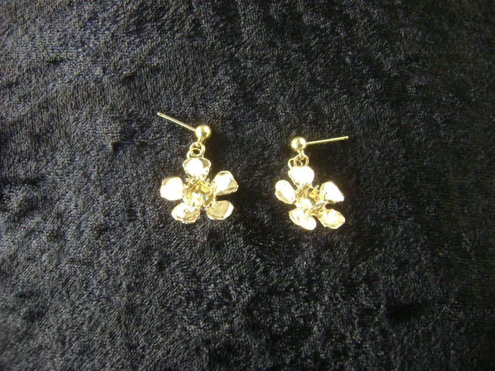 Image of GERALDTON WAX EAR STUDS J30001