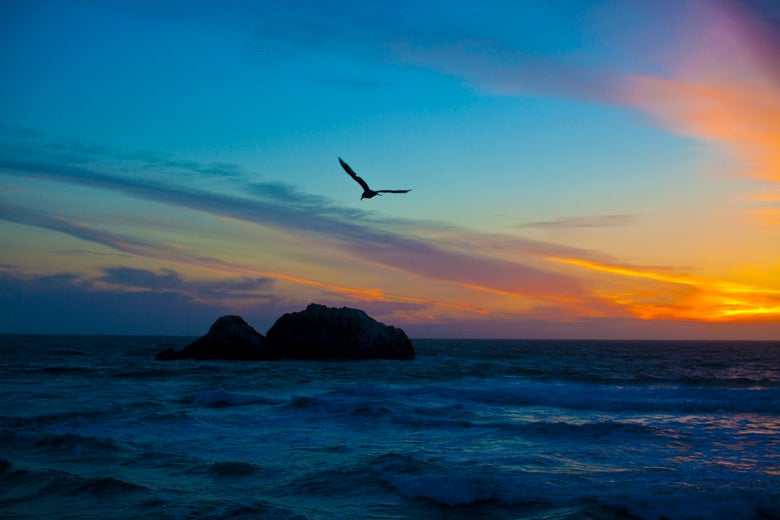 Image of Sutro Sunset