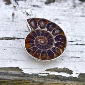 Image of Cephalopoda - Ammonite Fossil Necklace
