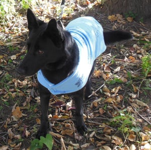 Image of Fleece Dog Coat Size Large pdf Pattern