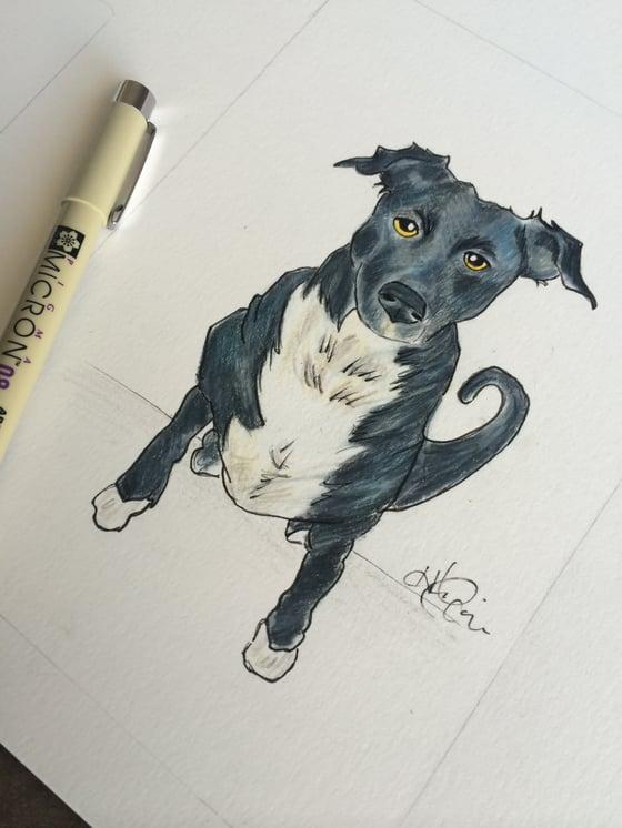Image of Pets only portrait 8x10
