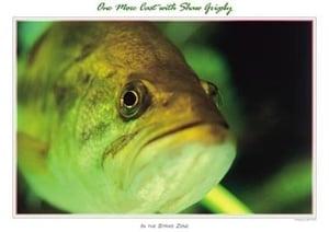 Image of Bass (close up) 18x24