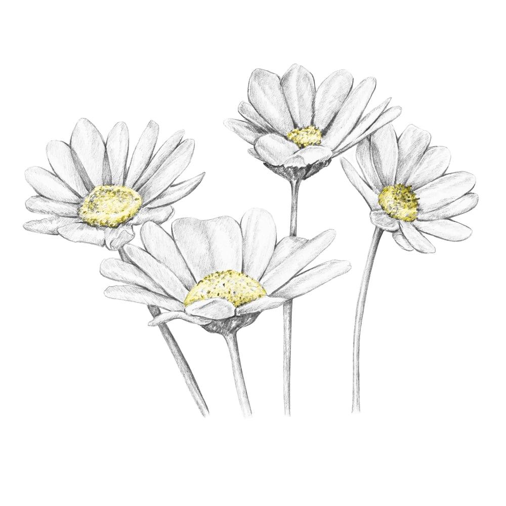 Image of Daisies - Original Artwork