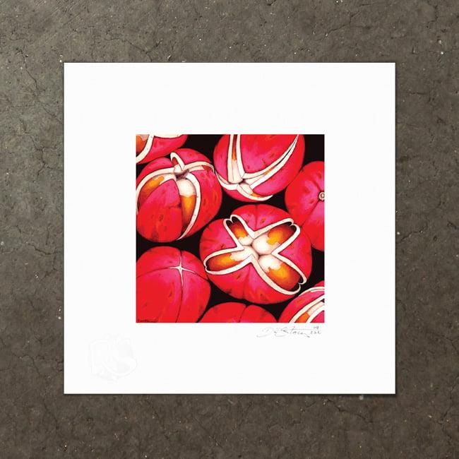 Image of Dysoxylum Arborescens - Art Print