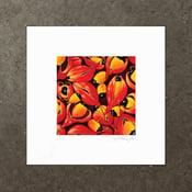 Image of Mischocarpus Exangulatus - Art Print