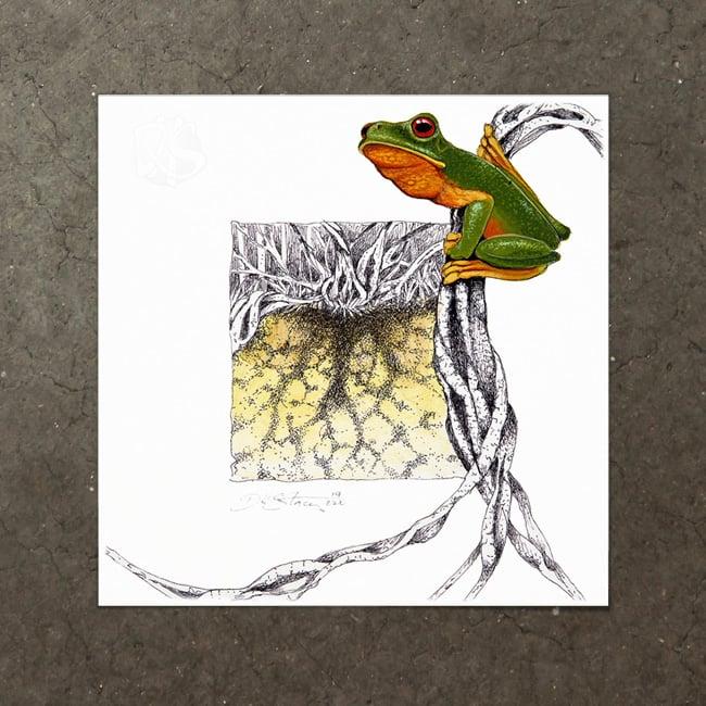 Image of Red Eyed Tree Frog  - Art Print