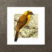 Image of Golden Bowerbird - Art Print