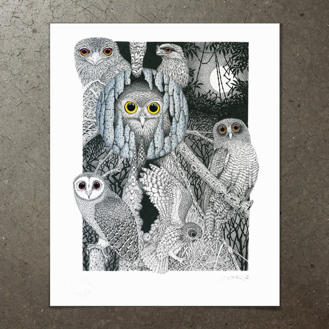 Image of Owl Study - Art Print