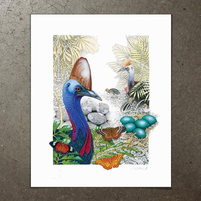 Image of Australian Cassowary - Art Print