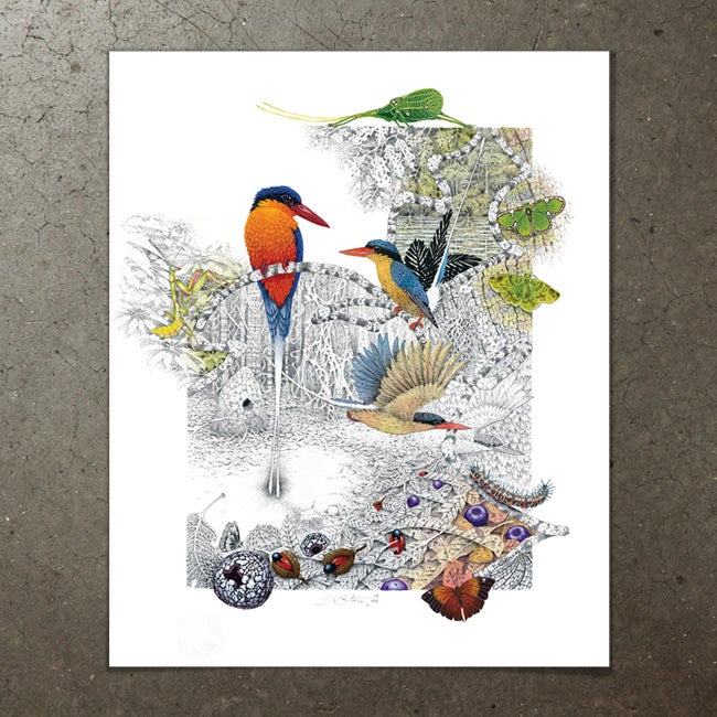 Image of Paradise Kingfisher - Art Print
