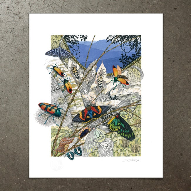 Image of Beetles, Moths and Butterflies - Art Print