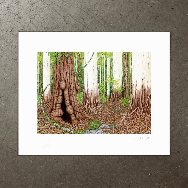Image of Sclerophyll Forest - Art Print