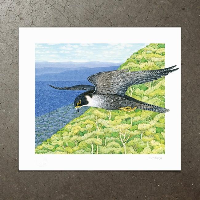Image of Peregrine Falcon - Art Print