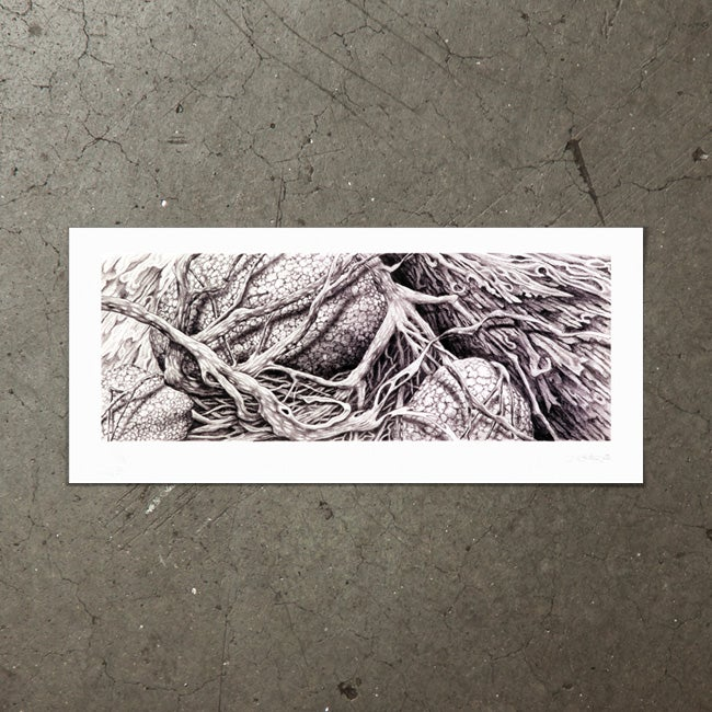 Image of Rocks and Roots - Art Print