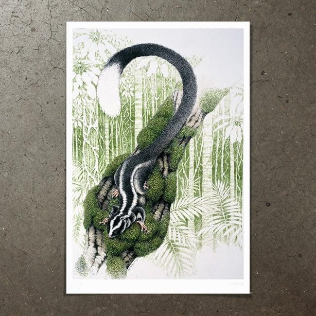 Image of Striped Possum - Art Print