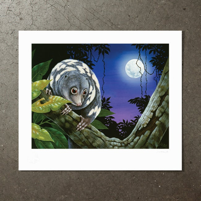 Image of January Moon (Spotted Cuscus) - Art Print